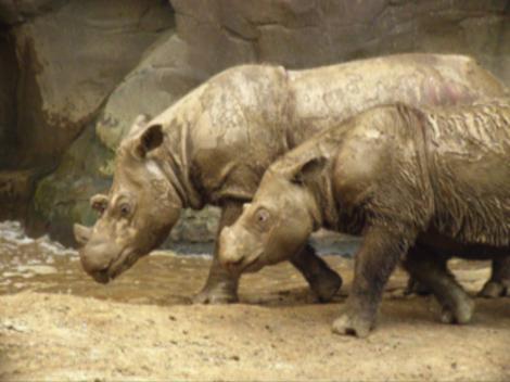 Brief History Of Rhino Poaching